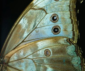 butterfly and wing image