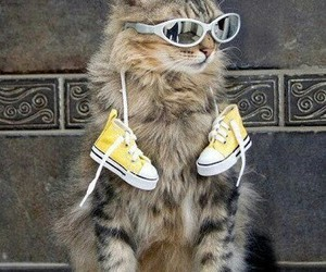 cat, kitten, and cool image