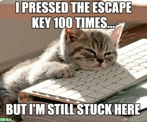 cat, computer, and escape image