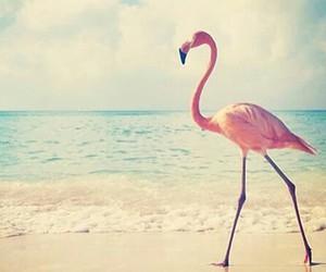flamingo, beach, and pink image