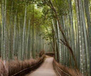 bamboo and travel image