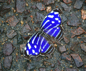 blue, photography, and butterfly image