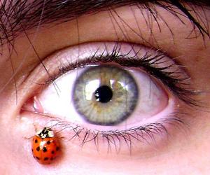 ladybug, melinwonderland, and beautiful image