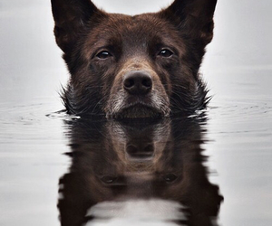 dog, water, and animal image