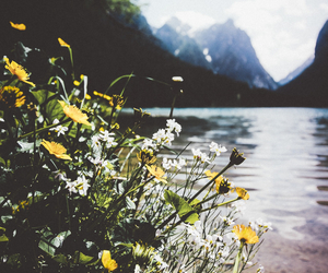 flowers, mountains, and beautiful image