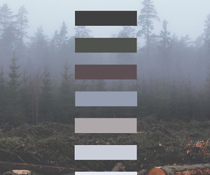 grunge and forest image