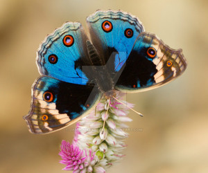 beautiful, butterfly, and flower image