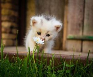 cat, animal, and kitten image