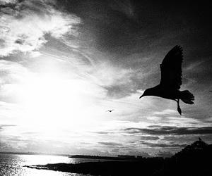 beach, bird, and black and white image