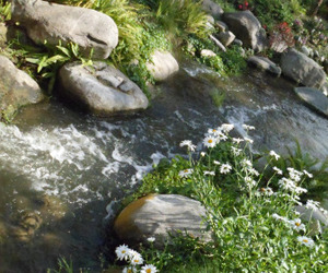 nature, river, and flowers image
