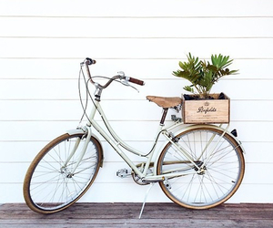 bike, bicycle, and plants image