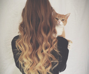 hair, cat, and hairstyle image