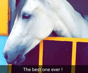 beautiful, beauty, and horse image