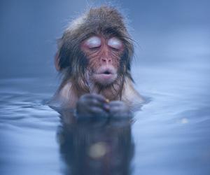 monkey, animal, and water image