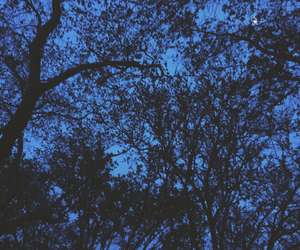 aesthetic, branches, and alternative image