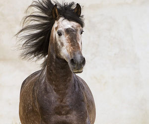 horse and mane image
