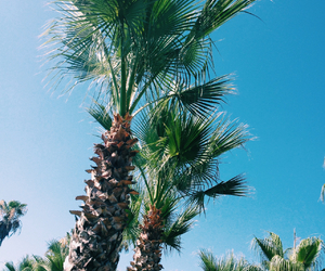 summer, tropical, and tumblr image