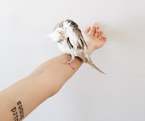 arm, visual statements, and bird image