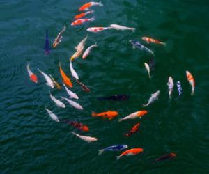 fish, water, and sea image