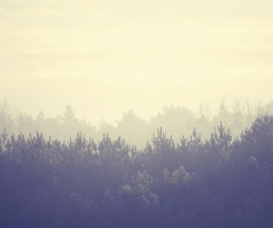 forest and horizon image