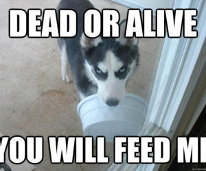 alive, dog, and funny image