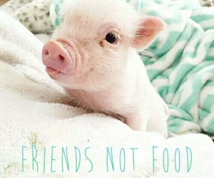 vegan, pig, and friends image