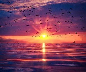 sunset, birds, and sea image