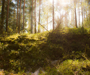 Dream, woods, and suomi image