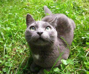 finland, grey, and cat image