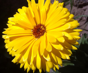 nature, yellow, and yellow flower image