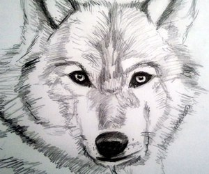 draw and wolf image