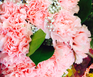 carnations and flowers image