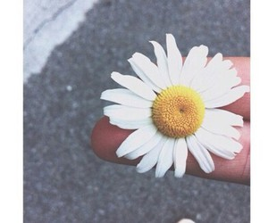 flower, daisy, and tumblr image