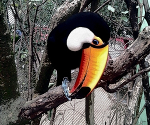 animal, nature, and toucan image