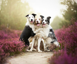 dog, animal, and friends image