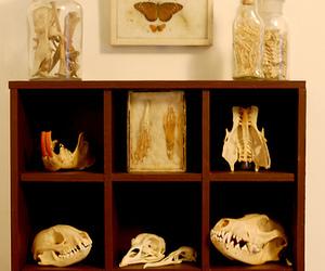 cabinet of curiosities, display, and specimen image