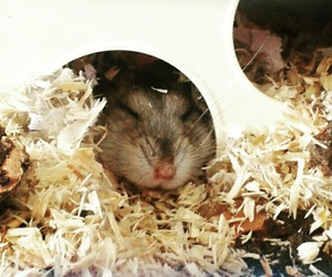 hamster, honey, and love image