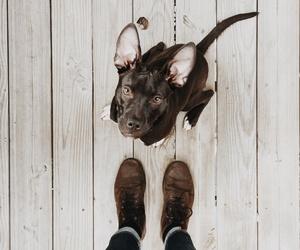 dog, ears, and man image