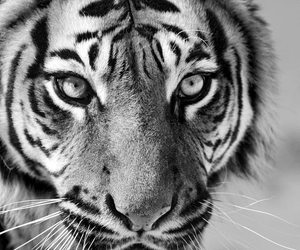 animal, wallpaper, and background image