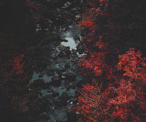 nature, red, and hipster image