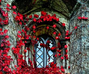 ancient, architecture, and flowers image