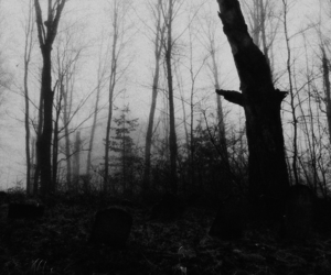 black & white, dark, and woods image