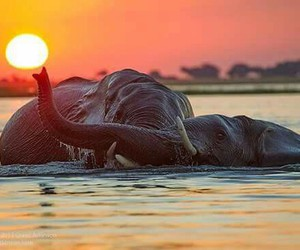 africa, water, and nature image