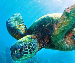 ocean, turtle, and cute image