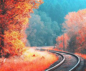 orange and nature image