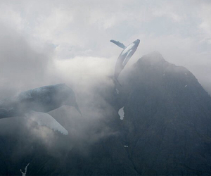 whale and mountains image