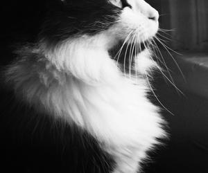 cat, animal, and black&white image