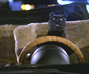 animal, cat, and salem saberhagen image