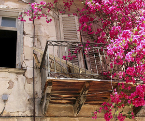 flowers, pink, and balcony image