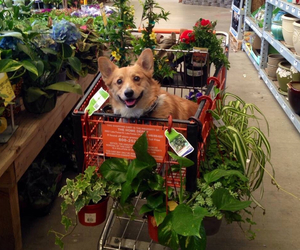dog, flowers, and plants image